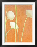 Framed Cream Flowers on Orange