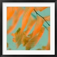 Framed Fern Dance 1