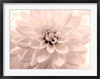 Framed Pink Dahlia 2