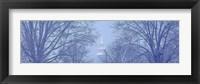 Framed NYC Winter