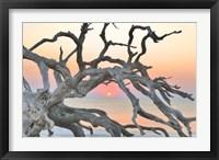 Framed Sunrise Sentinel