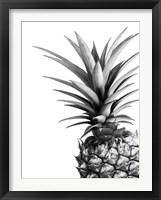 Framed Pineapple