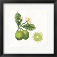 Framed Classic Citrus III
