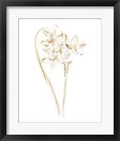 Framed Gilded Botanical IV