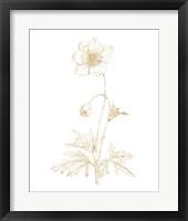 Framed Gilded Botanical II