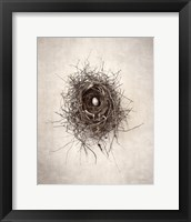 Framed Nest I