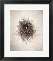 Framed Nest I