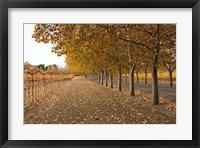 Framed Autumn Rows