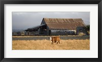 Framed Cow Portrait