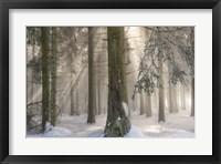Framed Winter Wonders II