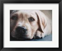 Framed Dog's-Eye View