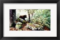 Framed Along The North Ridge