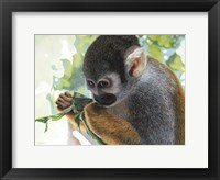 Framed Small Amazon