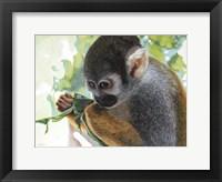 Framed Small Amazon