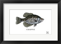 Framed Crappie Fish