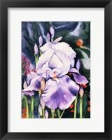 Framed Dancing Iris