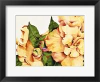 Framed Orange Blossom