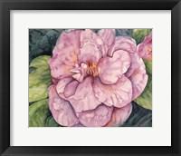 Framed Pink Camilla