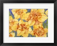 Framed Yellow Daffodils