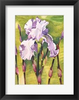 Framed Forest Iris