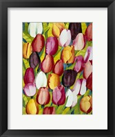 Framed Colorful Tulips