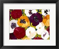 Framed Sacred Pansies