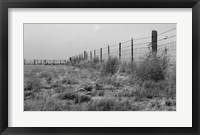 Framed Tumbleweed Fences and Sheep