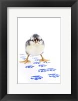 Framed Chicks 4