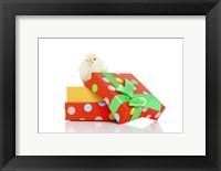 Framed Chicks 6