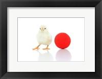 Framed Chicks 7