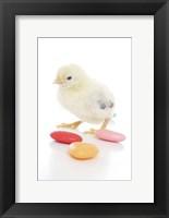 Framed Chicks 9