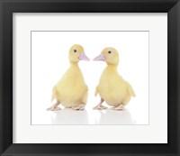 Framed Ducks 2