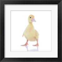 Framed Ducks 3