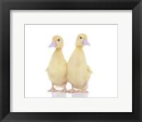 Framed Ducks 11