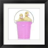 Framed Ducks 12