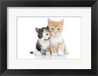 Framed Kittens 1
