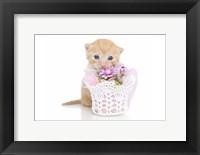 Framed Kittens 3