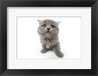 Framed Kittens 4