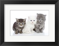 Framed Kittens 6