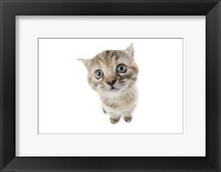 Framed Kittens 7