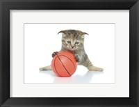 Framed Kittens 8