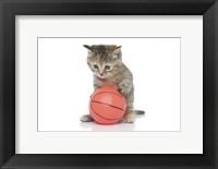 Framed Kittens 9