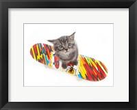 Framed Kittens 11
