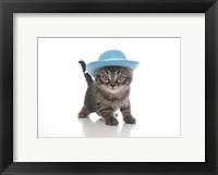 Framed Kittens 12