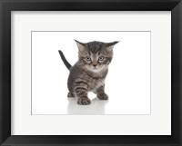 Framed Kittens 13