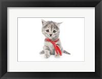 Framed Kittens 14