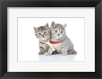 Framed Kittens 15