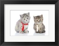 Framed Kittens 16