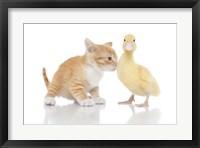 Framed Kittens 17