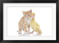 Framed Kittens 18